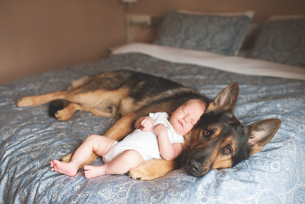 baby and puppy photography wauwatosa wisconsin